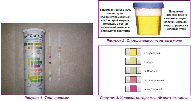 Народные методы определения беременности: как определить беременность на ранних сроках / mama66.ru