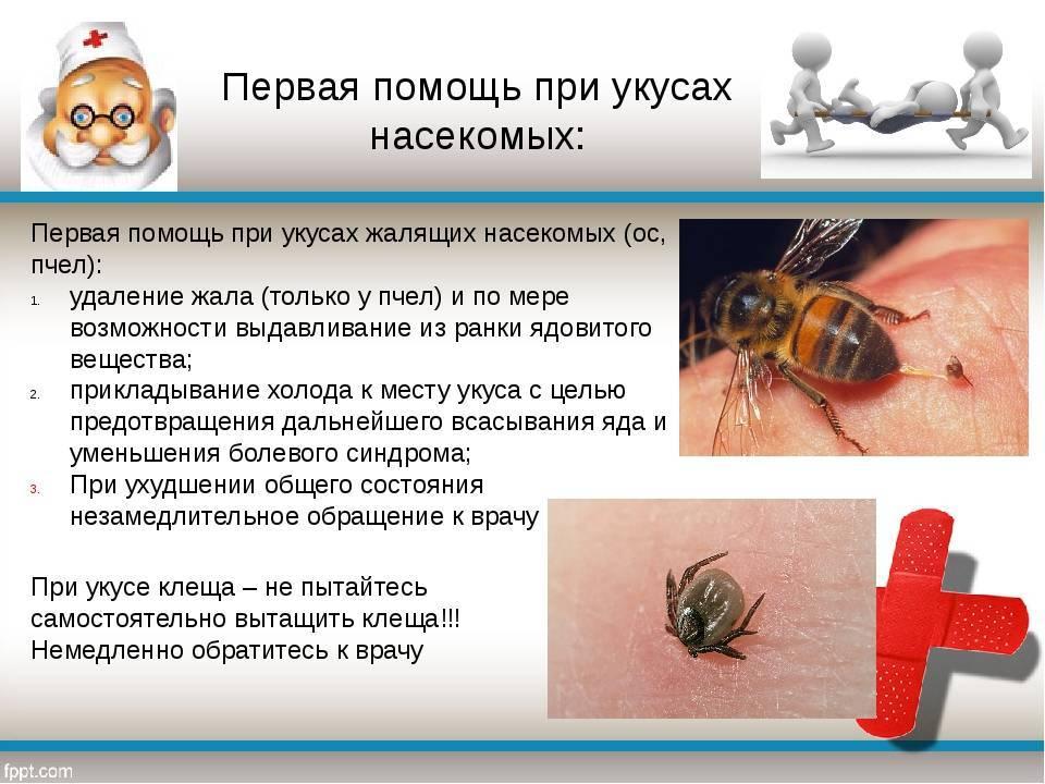 Как распознать и предотвратить анафилактический шок от укуса насекомых - первая помощь