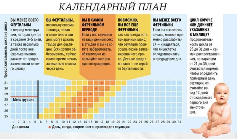 Овуляция после родов при гв – лактация (13 ответов врача!)