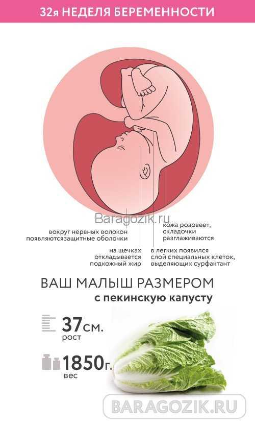 32 неделя беременности (46 фото): что происходит с малышом и мамой, сколько месяцев в 32-31 неделе, секс и развитие плода на 32 акушерской неделе