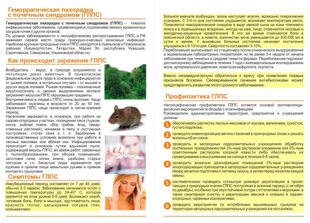 Мышиная лихорадка - симптомы и лечение, препараты, осложнения | здрав-лаб