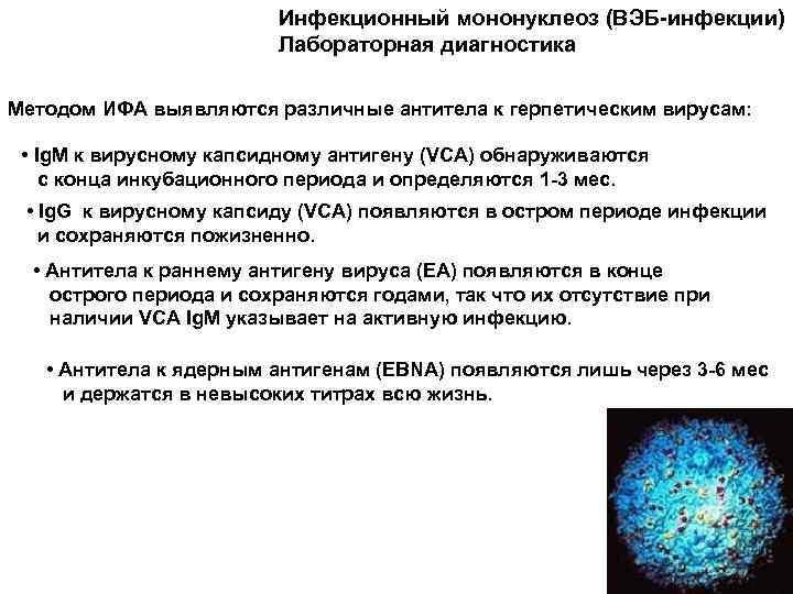 Правила сдачи анализов на антитела к вирусу эпштейна-барр и расшифровка результатов