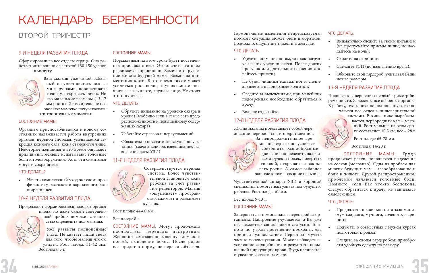 24 неделя беременности: развитие плода, состояние будущей матери