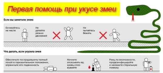 Первая помощь при укусе гадюки: верный вариант, порядок оказания