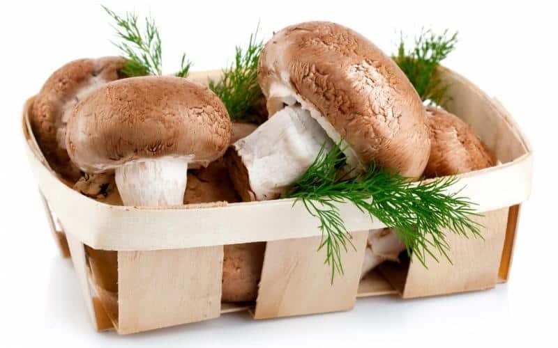 Как правильно включать в рацион кормящей женщины грибы