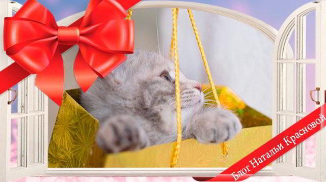 Котенок – подарок не для каждого