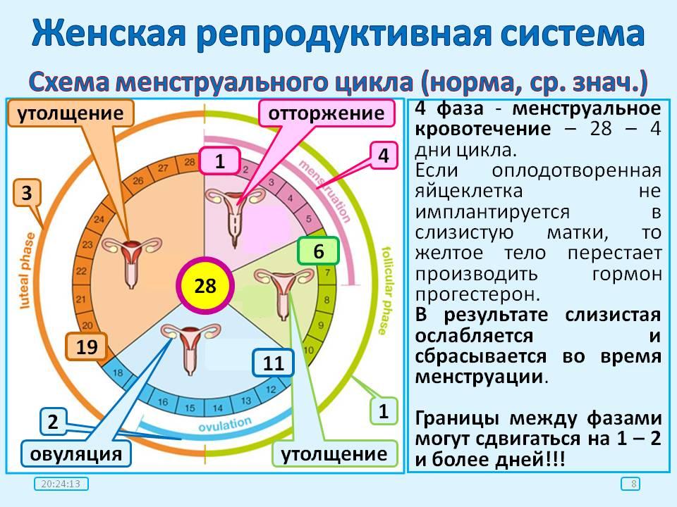 Сбой цикла месячных   симптомы, причины, лечение