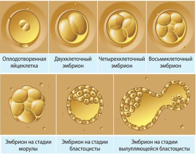 Криоперенос эмбрионов после неудачного эко
