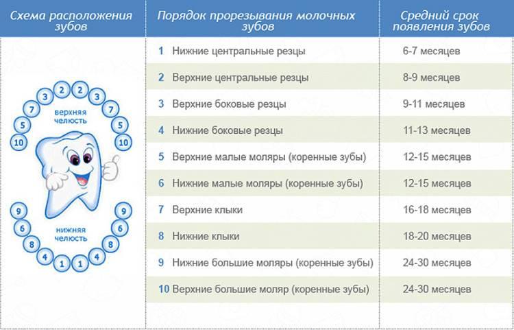 Порядок прорезывания молочных зубов у детей: схема очередности и последовательности, сроки, как растут зубы