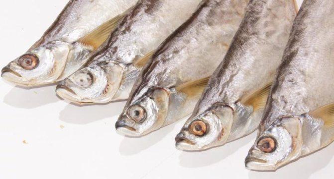 Можно ли есть лосось при грудном вскармливании