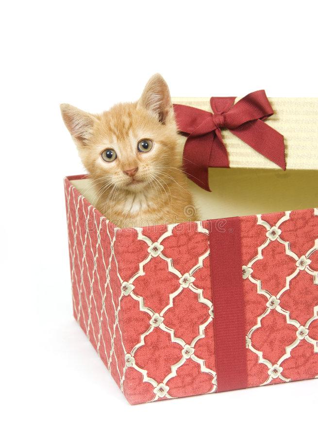 Котенок как подарок к новому году - котостудия
