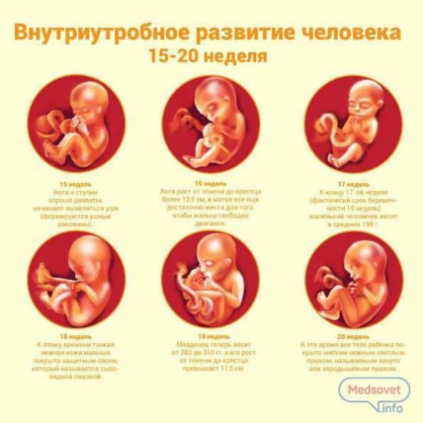 Все пороки плода на узи: таблица развития, расшифровка генетических отклонений