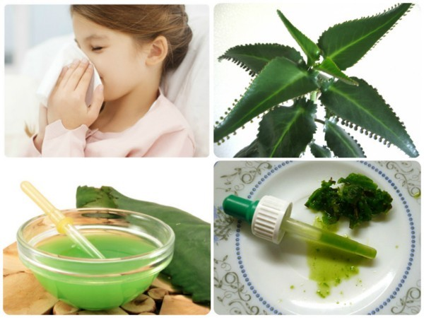 Лечение насморка у детей народными средствами в домашних условиях