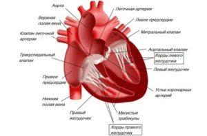 Дополнительная хорда в сердце: что это такое, причины, диагностика, лечение
