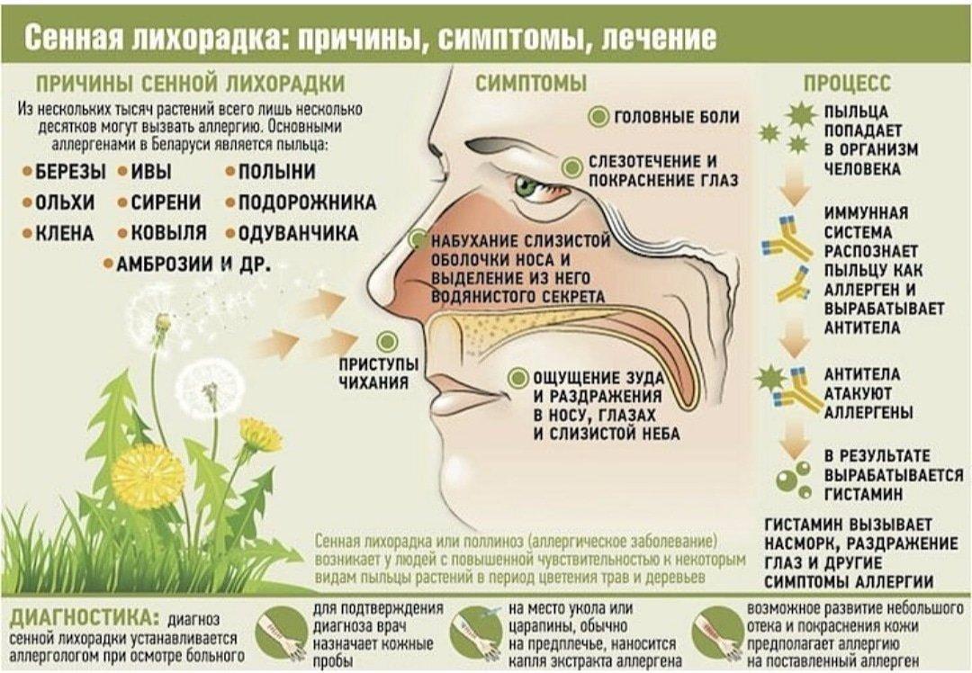 Поллиноз (сенная лихорадка): симптомы и лечение