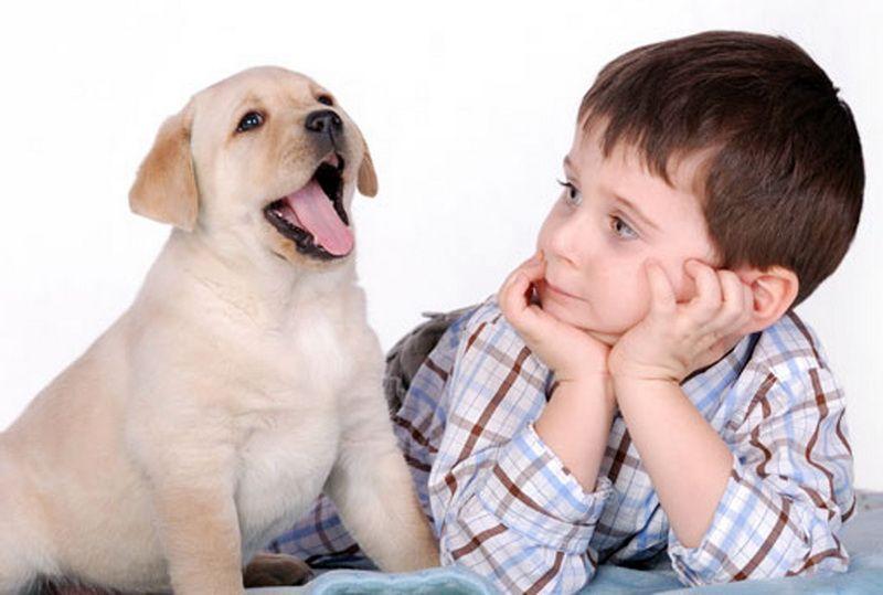 Взаимоотношения детей и домашних животных