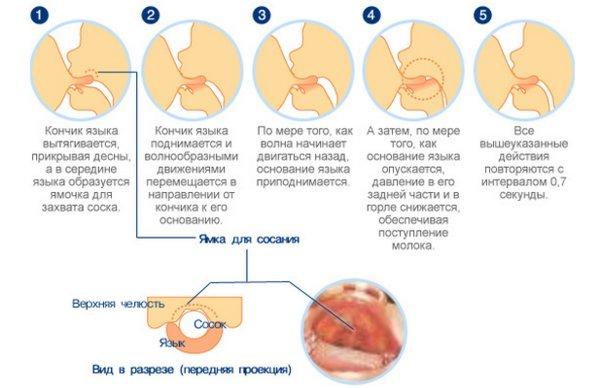 Грудное вскармливание: как наладить личный опыт плюсы рекомендации педиатров комаровского искусственное кормление знания решение проблем