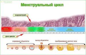 Почему происходит сбой менструационного цикла