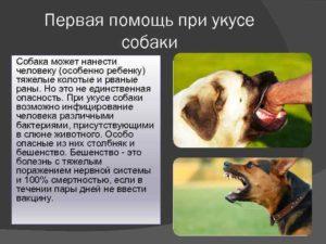 Укусила собака, что делать? осложнения травмы, бешенство, симптомы, лечение, последствия, первая помощь.  прививки после укуса собаки детям. :: polismed.com
