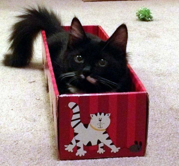 Котенок в новом доме первые дни. адаптация котенка в новом доме. переезд и поведение котенка в новом доме. что нужно купить котенку.