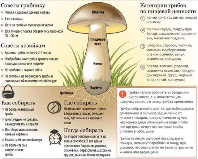 С какого возраста можно давать ребенку грибы