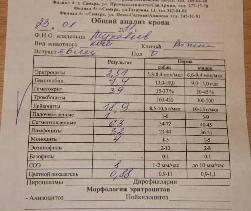 Анализ кала на глисты. достоверен ли результат