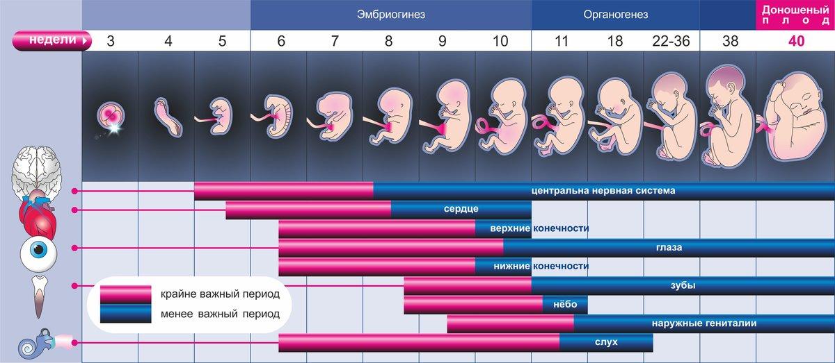 Беременность после приема антибиотиков: когда можно планировать зачатие?
