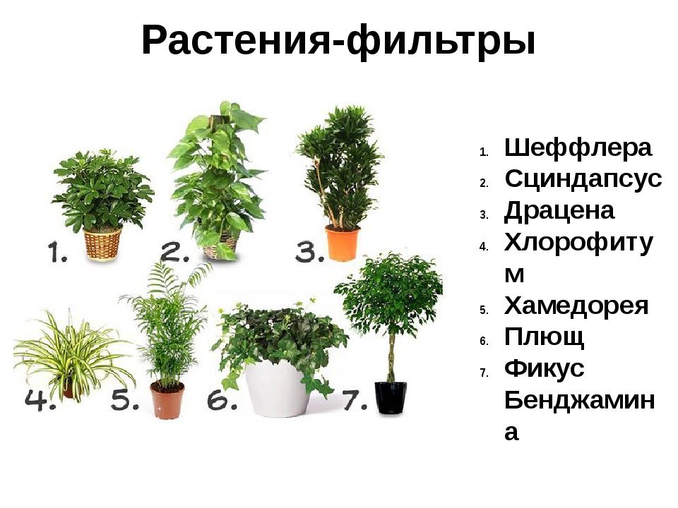 Цветы для детской комнаты: какие можно держать и как выбрать полезные, советы
