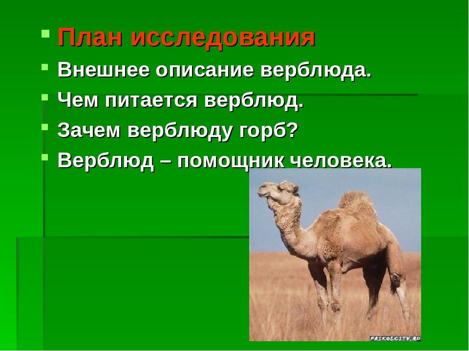 Зачем горбы верблюду. как объяснить ребенку 3-5 лет зачем верблюду горбы | интересные факты