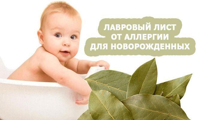 Польза лаврового листа при аллергии и рецепты его применения