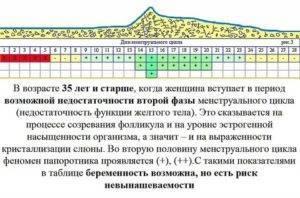 Рассчитываем календарь овуляции