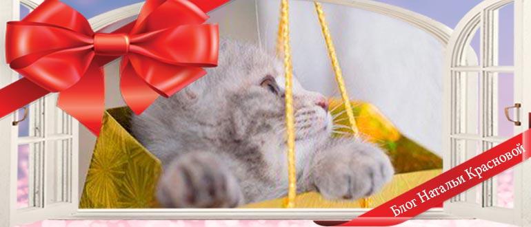 Кому и почему не стоит дарить котенка?