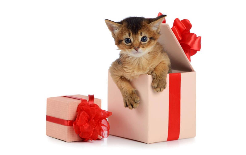 """""""человек, смотри, что я тебе принес"""": неожиданные подарки от кошек своим хозяевам"""