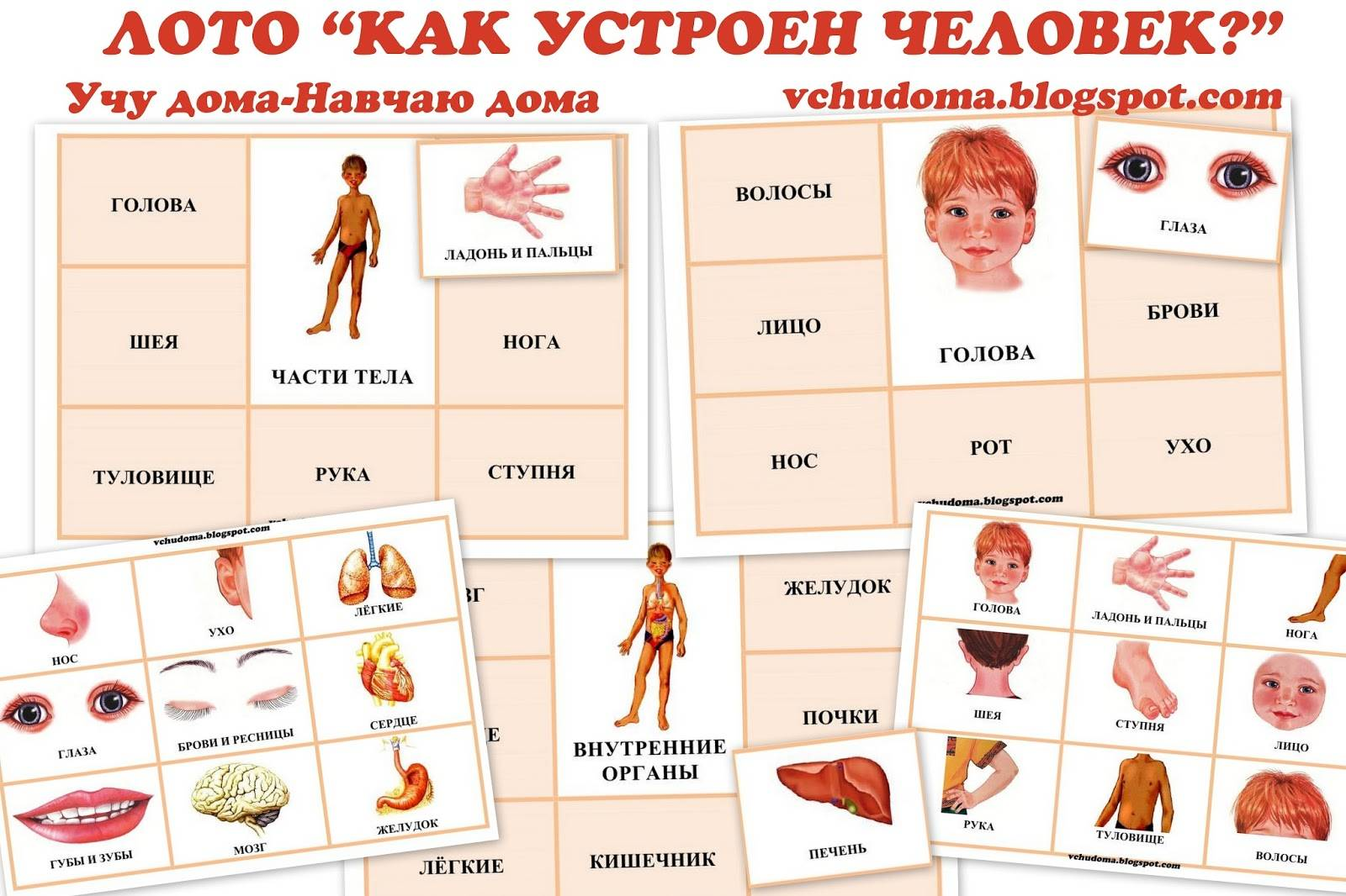 Части тела – картинки для детей дошкольного возраста, задания, игры