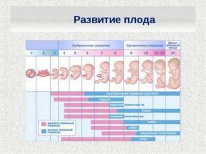 6 неделя беременности