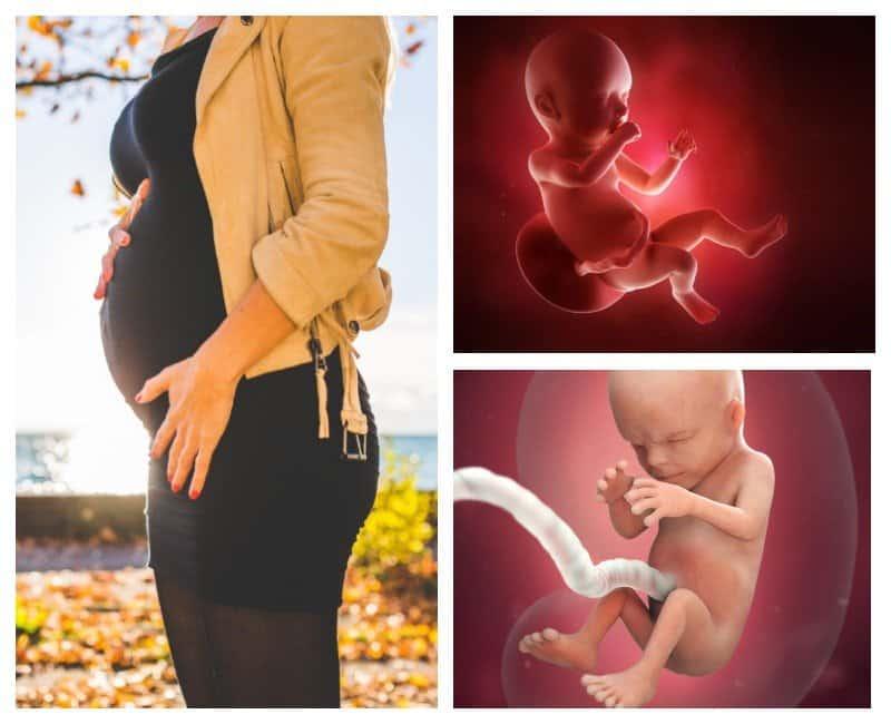 30 неделя беременности: пора оформлять декретный отпуск