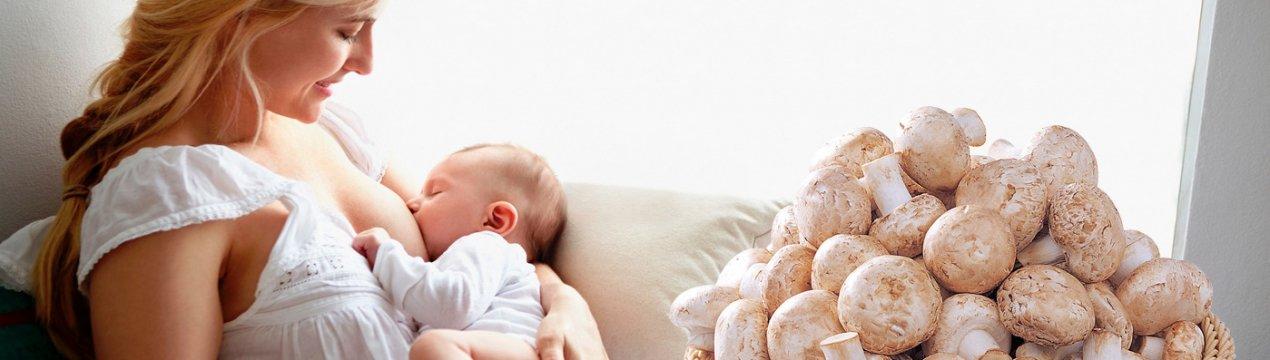 Грибы при грудном вскармливании, можно ли их есть кормящим мамам