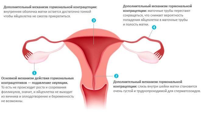 Как предотвратить беременность после акта
