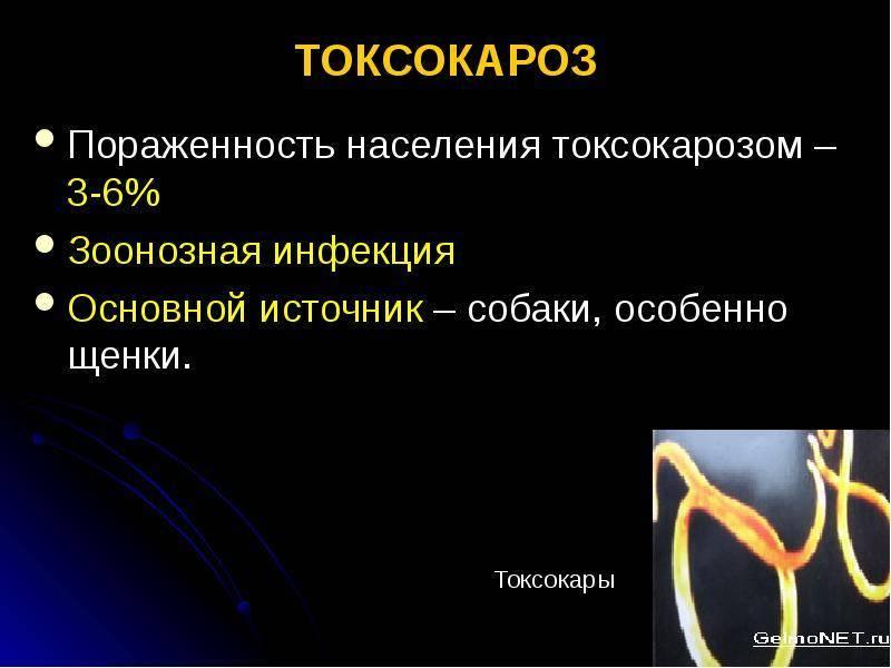 Токсокароз: симптомы, лечение и профилактика