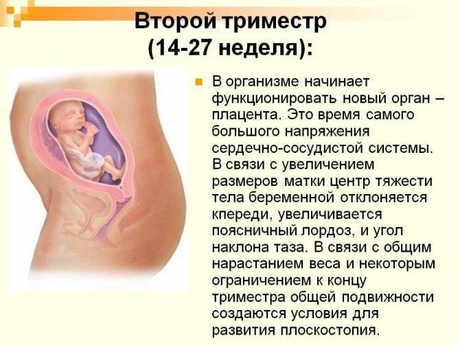 2 триместр беременности   уроки для мам