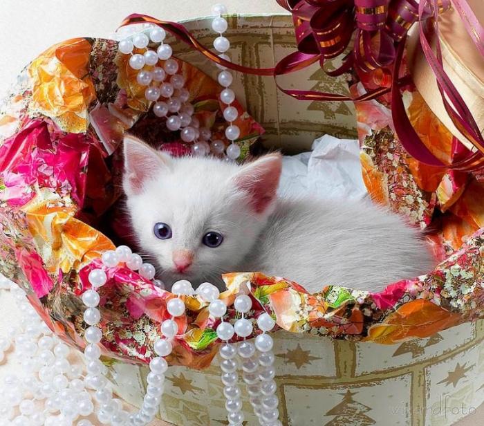 Котенок — подарок не для каждого