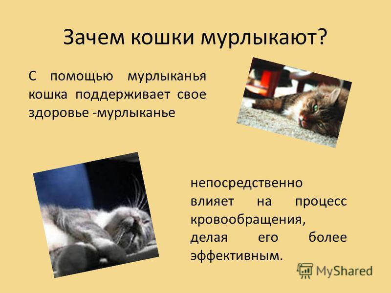 Почему и как коты и кошки издают мурлыкающие звуки? - детская онлайн энциклопедия «хочу всё знать»