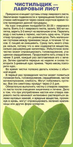 Лавровый лист при беременности на ранних и поздних сроках: можно ли и как приправа влияет на плод, запрет и опасность выкидыша, допустимое применение