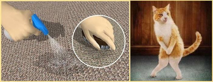 Как избавиться от запаха мочи на диване в домашних условиях