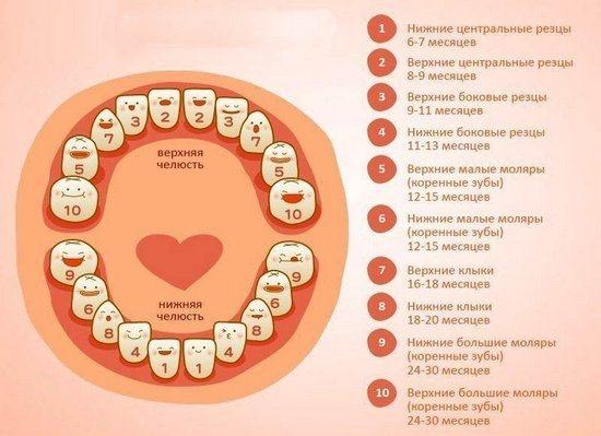 Как начинают лезть зубы у детей: изучаем порядок прорезывания