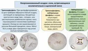 Оксалаты в моче у детей - болезни почек