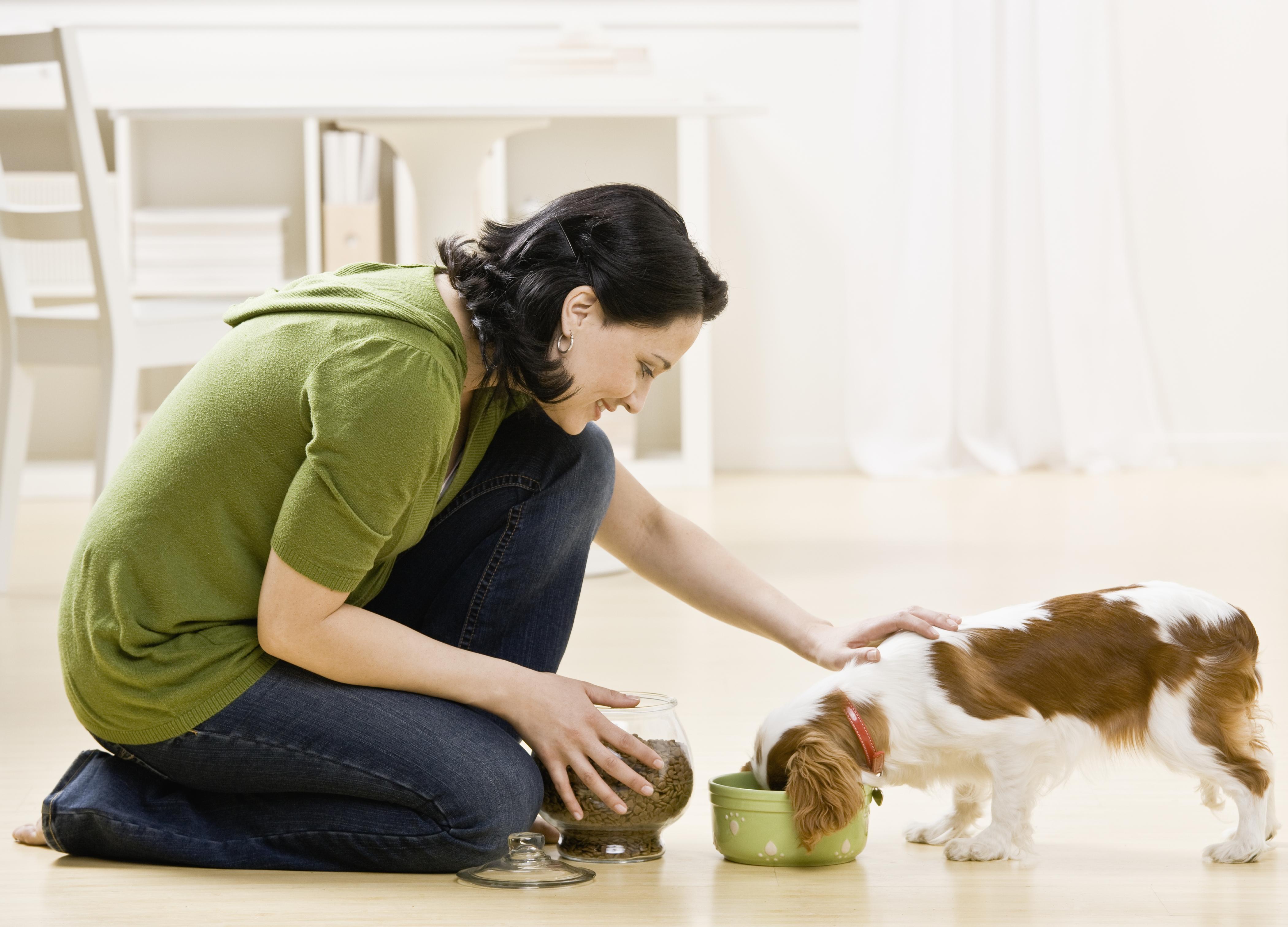 Какое домашнее животное лучше завести в квартире: советы по выбору, уходу и содержанию