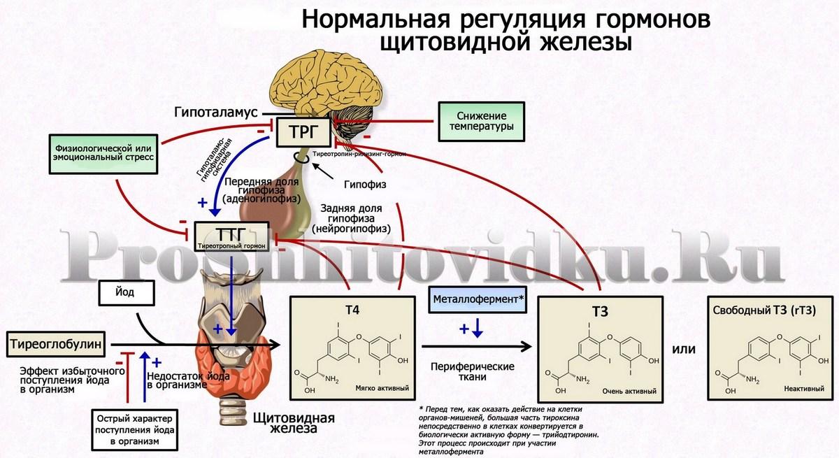 Пролактин: что это за гормон, какая норма у женщин по возрасту и циклу, какие причины повышения и как лечить?