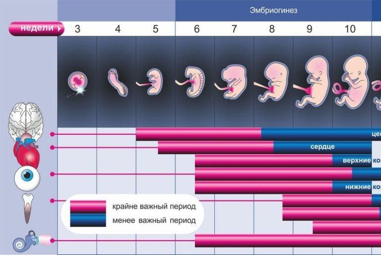 Беременность 10 недель – развитие плода и ощущения женщины