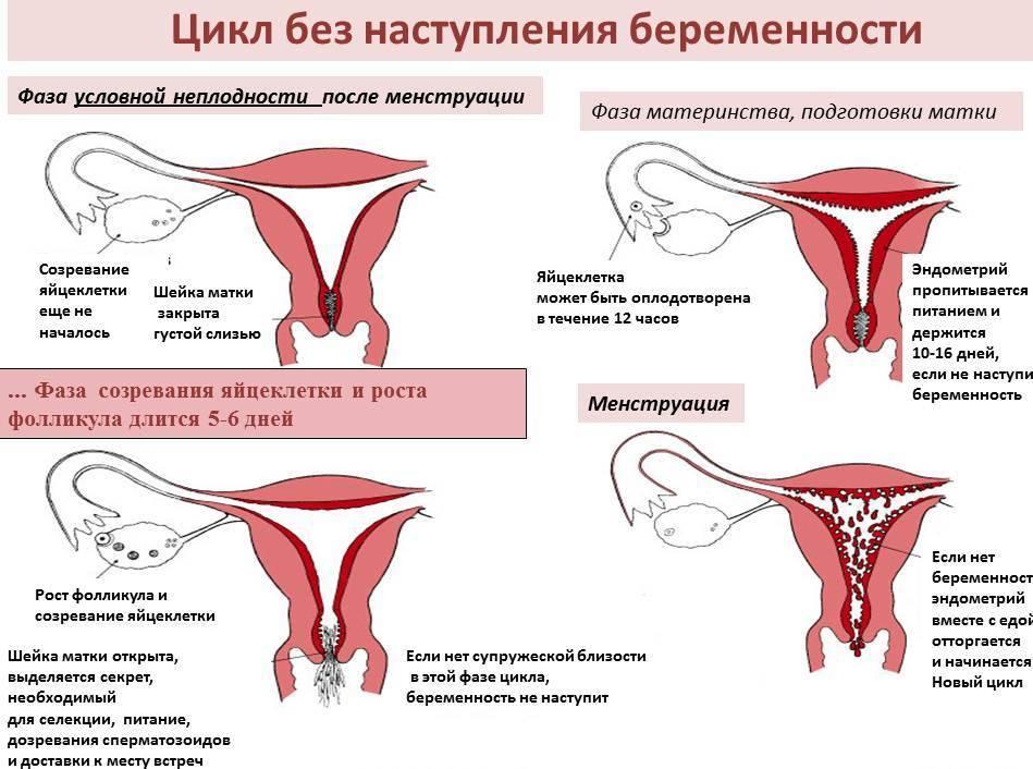 Влияет ли уреаплазма на зачатие ребенка